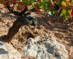 Calcareous soils