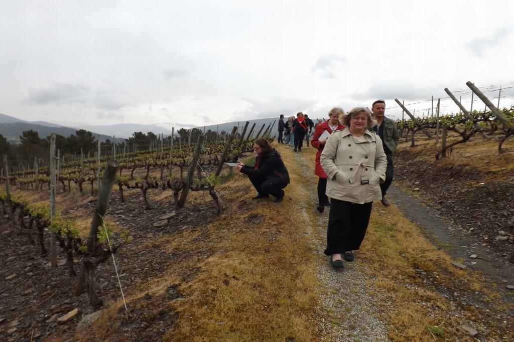 Visita MW a los viñedos de Godeval